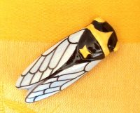 cicada_magnet2